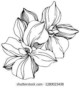 Vector Orchid floral botanical flower. Wild spring leaf wildflower isolated. Black and white engraved ink art. Isolated orchid illustration element.