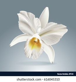 Vector of orchid flower, isolated background.