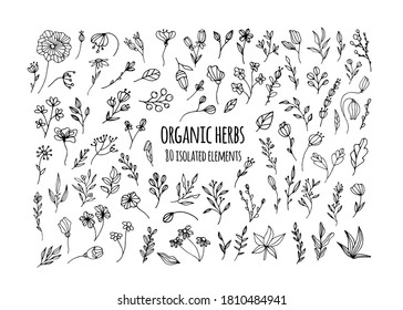 Vector organic herbs. Set with herbs, flowers, Ayurvedic plants, twigs. Design of logos, fabrics, dishes, and clothing. Minimalistic elements for the design of greeting cards, invitations.Organic herb
