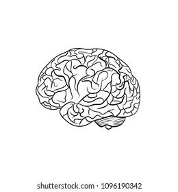Vector Outline Brain, Line Graphic Art, Black Contour Lines.