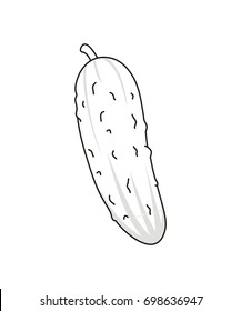 Vector Outline Cucumber. Illustration of cucumber on white background. Vegetable cucumber - cartoon.