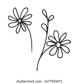 Vector outline daisies in doodle style.
