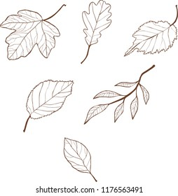 Vector Outline drawing of autumn leaves isolated on white background