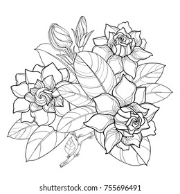 Vector outline Gardenia flower bunch, bud and ornate leaves in black isolated on white background. Bouquet with tropical fragrant plant Gardenia in contour style for summer design and coloring book.