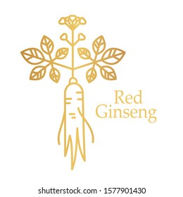 Vector outline illustration of red or panax ginseng root with leaves and berries isolated on a white background. Ginseng line drawing for print, icon, logo, emblem, label and other decoration.