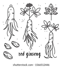 Vector outline illustration set of red or panax ginseng root isolated on a white background. Ginseng drawing for print, icon, logo, emblem, label and other decoration in.