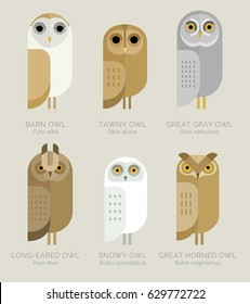 Vector owls set. Varieties of owls. Characters collection. Geometric simple design. Pastel shades.
