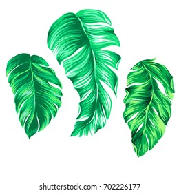 vector palm illustrations, isolated on white. Beautiful palm leaves. Graphic design elements, isolated, Tropical design elements.