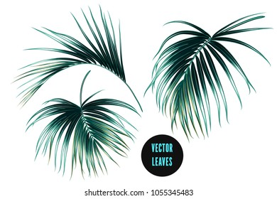 Vector palm leaves, jungle leaf set isolated on white background. Tropical botanical summer illustrations, green foliage, floral elements