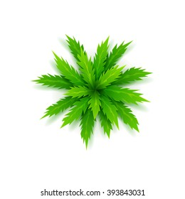 Vector palm tree isolated on a white background. View of cartoon palm tree on top. Vector illustration.