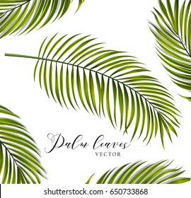 Vector palm tree leaves for poster, t-shirt, label, sticker and any design with summer theme.