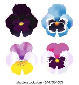 vector pansy flower , beautiful little flower , eatable flower