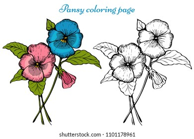 Vector pansy flower. Botanical coloring page for children and adults.