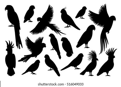 Vector parrot silhouettes of amazon jungle isolated on white background