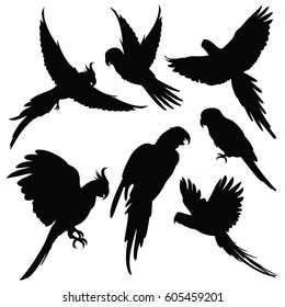Vector parrots, amazon jungle birds silhouettes isolated on white. Black silhouette parrots, illustration of exotic bird parrot