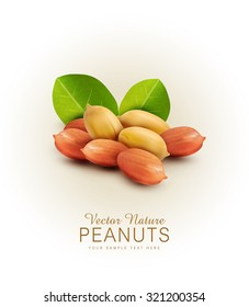 Vector peanut kernels isolated with green leaves (design element)