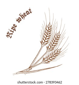 """vector pencil hand drawn illustration of wheat with label """"ripe wheat"""""""