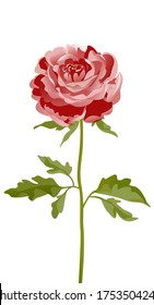 Vector peony flower, rose flower. Greeting card with rose, pink peonies.