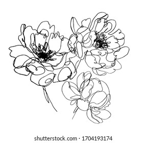 vector peony flowers. abstract flower illustration. hand drawn one line flower drawing. botanical art.