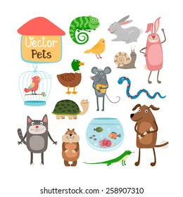 Vector pets illustration isolated on white background