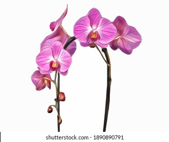 Vector of the phalaenopsis orchid. Illustration of pink cascade orchid flowers isolated on white background.