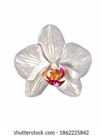 Vector of the phalaenopsis orchid. Illustration of white orchid flower with red lip and isolated on white background.