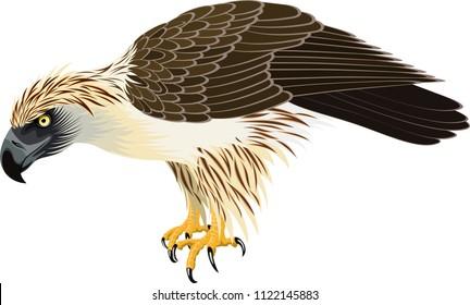 vector philippine Eagle - Pithecophaga jefferyil
