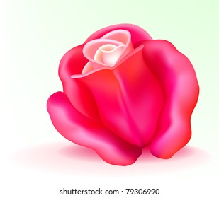 Vector photo-realistic beautiful pink rose on a white background