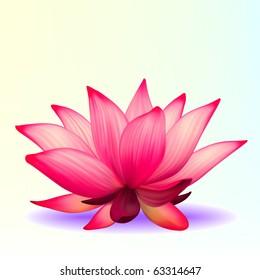 Vector photo-realistic lotus flower