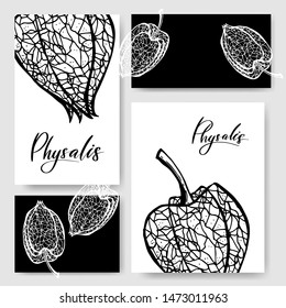 Vector physalis. Cape Gooseberry (winter cherry). Design for banner, poster, card, print. Vector illustration.