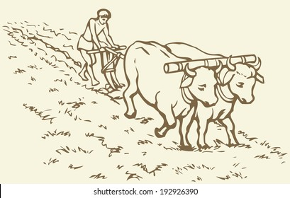 Vector picture. Primitive agriculture ancient Asian and African world: Egypt, Assyria, Babylon, India, China. Young servant on a pair of oxen-drawn plow grassy virgin soil for sowing wheat seeds