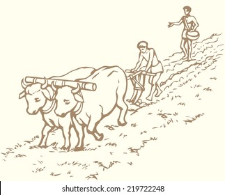 Vector picture. Primitive agriculture ancient Asian and African world: Egypt, Assyria, Babylon, India, China. One farmer plows land plot pulled on a pair of oxen. Second sows wheat grain plowed field