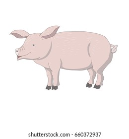 vector of pig
