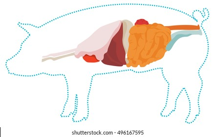 Pig Anatomy Images Stock Photos Vectors Shutterstock