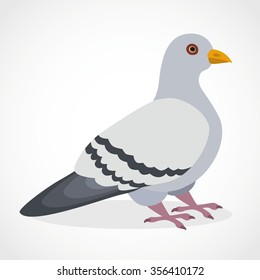 Vector pigeon cartoon character template. Pigeon isolated hand drawn. Pigeon bird icon