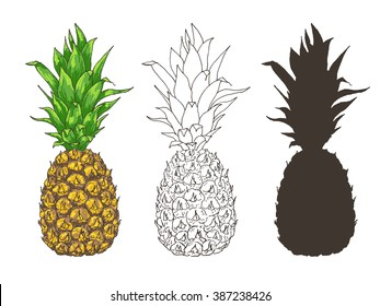 Vector pineapple illustrations set, hand drawn ananas sketch in color, outlines and silhouette. Summer juicy fruit