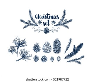 Vector Pinecone set, hand drawing sketch illustration. Trendy design for card, holiday decor. Collection of sketch object, botanical illustration pine cone, cedar. Vintage engraved graphic collection