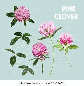 vector pink clover flower illustration. element collection set. pink floral hand drawn. greeting card.
