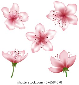 Vector pink flower set. Realistic blossom elements illustration, isolated on white. Peach blooming, apricot bloom, sakura or cherry blossom. Vector icon set. Element for spring design, invitation card