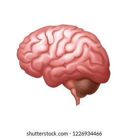 Vector pink human brain side view close up isolated on white background