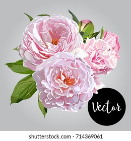 Vector Pink Peonies Illustration
