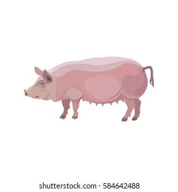 Vector pink pig on a white background