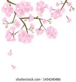 vector pink trumpet tree, beautiful pink flower in park
