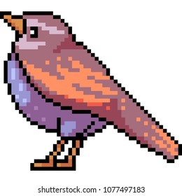 vector pixel art bird fat isolated cartoon