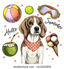 Vector portrait of beagle dog. Hello summer cartoon illustration. Coconut cocktail, balls, ice cream. Hand drawn pet portait. Poster, t-shirt print, holiday celebration, postcard, summertime.