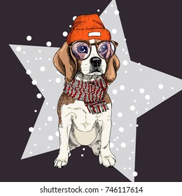 Vector portrait of beagle dog wearing beanie, glasses and scarf. Isolated on star and snow. Sketched color illustration. Christmas, Xmas, New year. Party decoration, promotion, greeting card.
