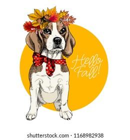 Vector portrait of Beagle girl dog wearing autumn leaves crown. Hello fall illustration. Oak, maple, chestnut, rowen. Hand drawn pet portait. Poster, t-shirt print, postcard, seasonal greeting