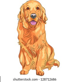 Vector portrait of a close-up of smiling red gun dog breed Golden Retriever sitting