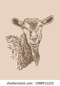 Vector portrait of  goat ,farm animal,sepia illustration