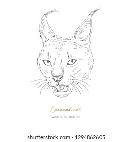 Vector portrait illustration of roaring wild caracal cat. Hand drawn ink realistic sketching isolated on white. Perfect for logo branding t-shirt coloring book design.
